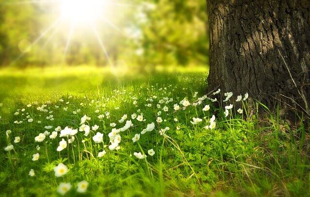 sunshine for emotional balance